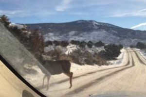 deer walking away